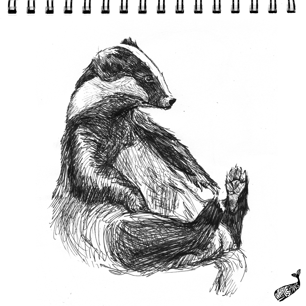 36-BADGER-inktober-WP.png