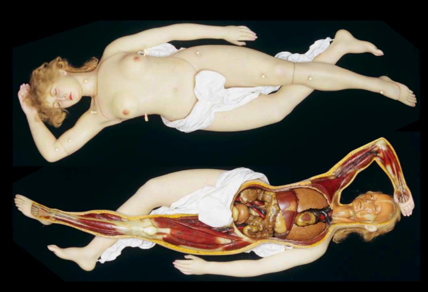 "Image shows an ""anatomical venus"" an antique wax figure used for anatomical study of unknown to me origin. It's from the book  The Anatomical Venus: Wax, God, Death, and the Ecstatic  by Joanna Ebenstein."