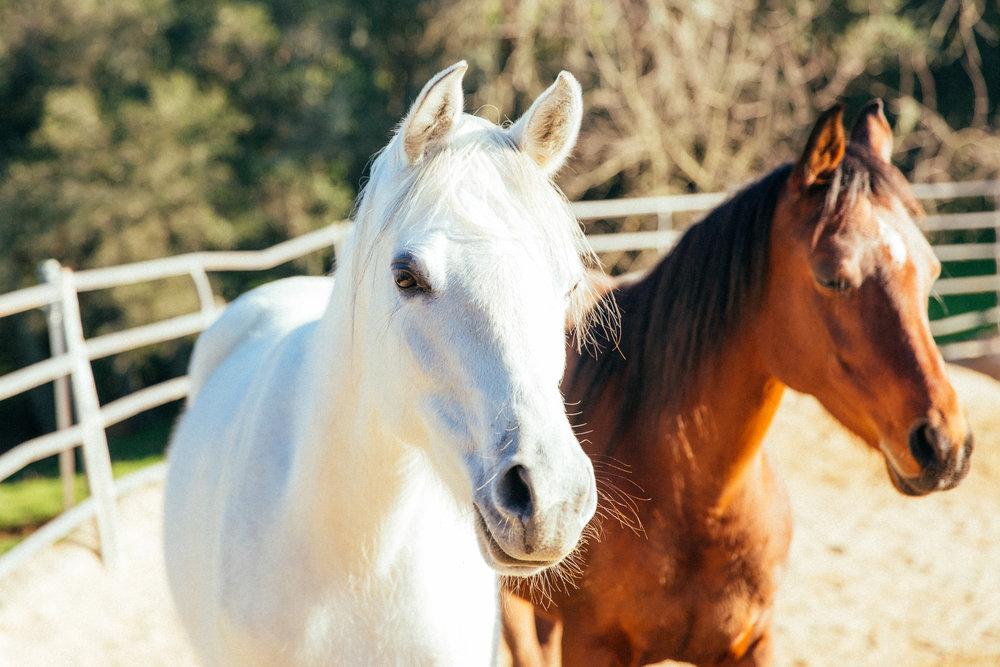 horses014.jpg