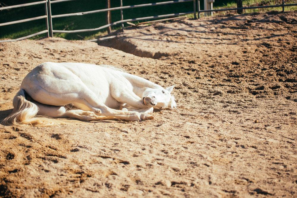 horses015.jpg