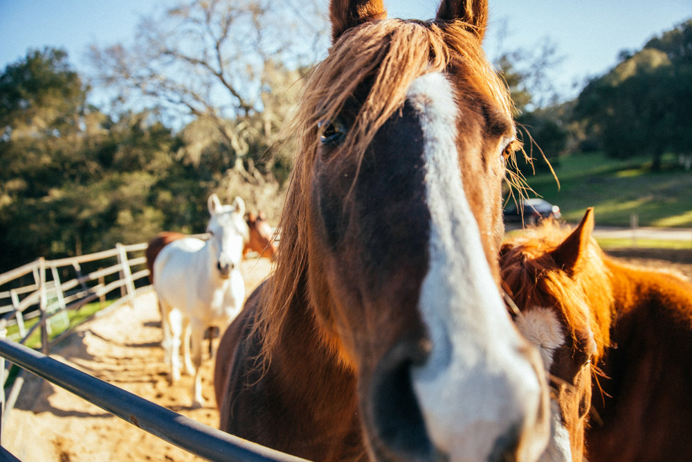 horses025.jpg