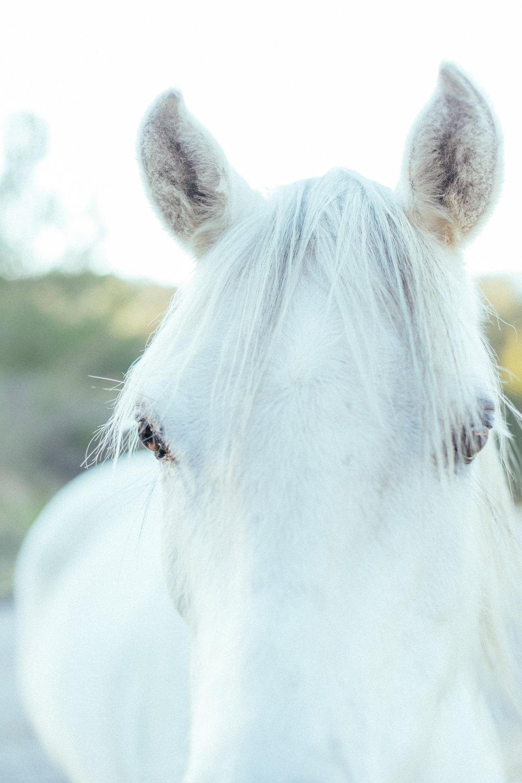 horses041.jpg