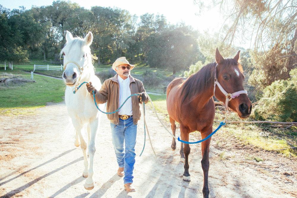 horses058.jpg