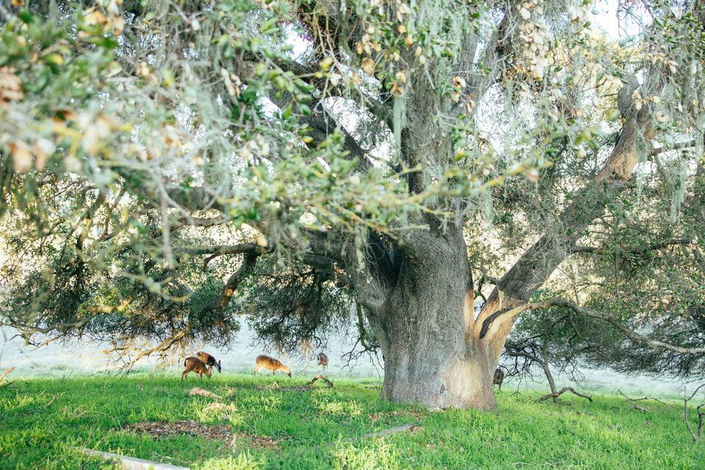 horses124.jpg