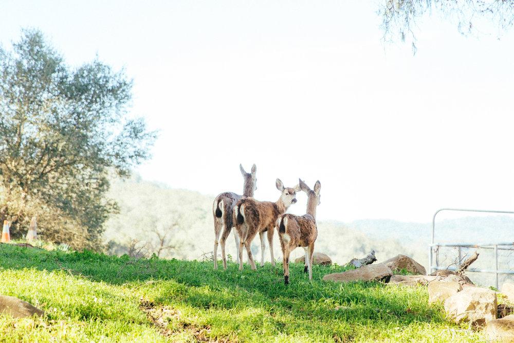 horses126.jpg