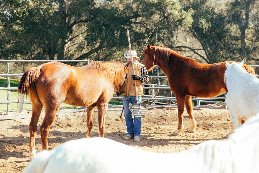 horses144.jpg