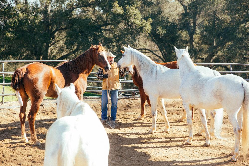 horses146.jpg