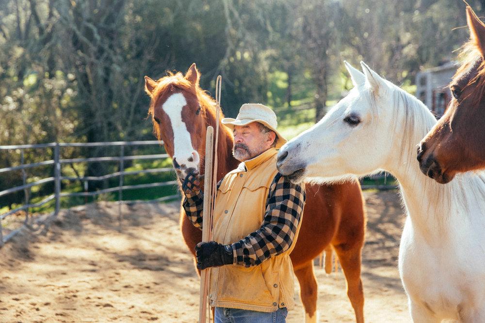horses150.jpg
