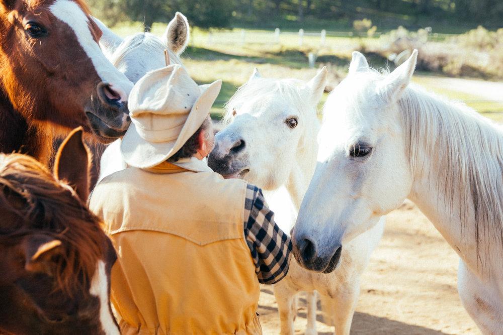 horses156.jpg