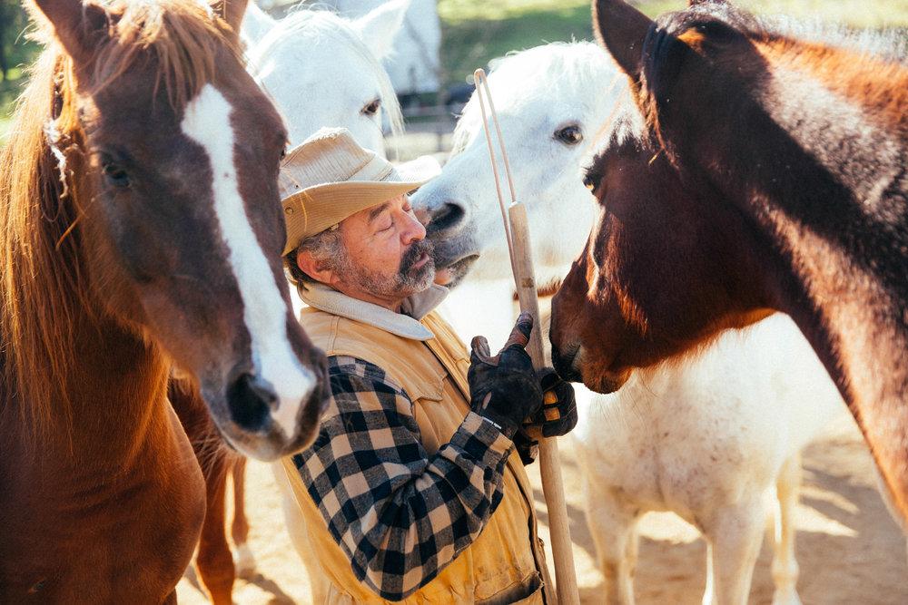 horses159.jpg