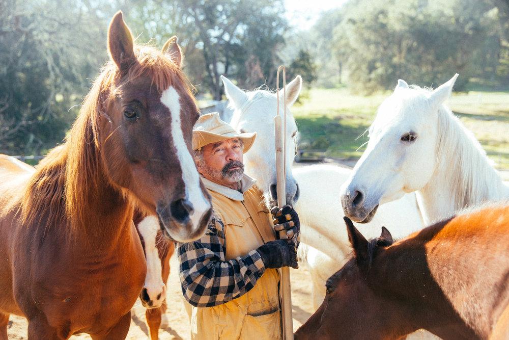 horses162.jpg