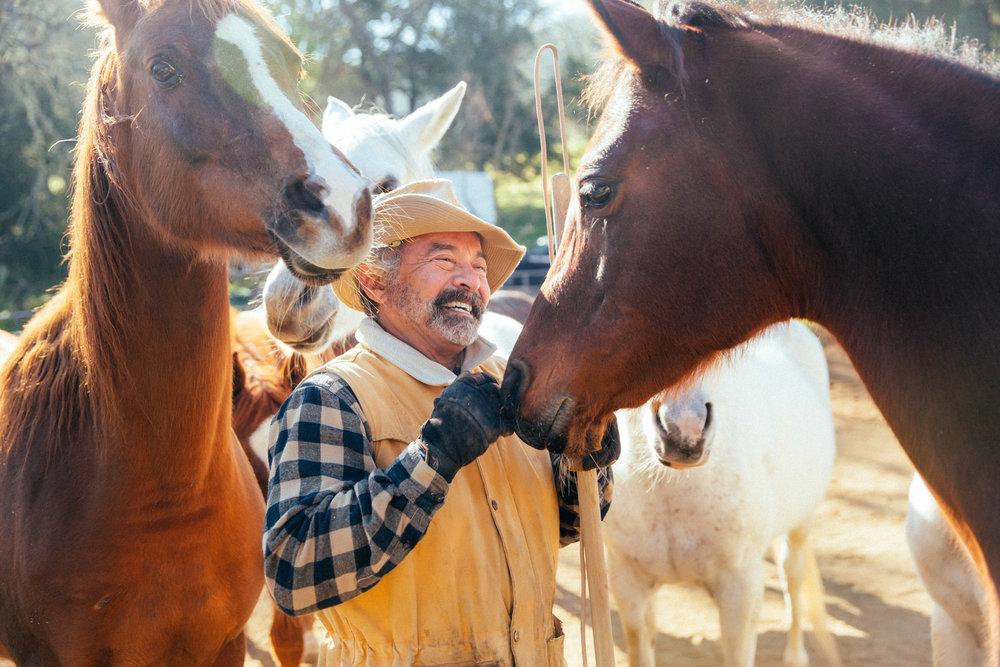 horses163.jpg