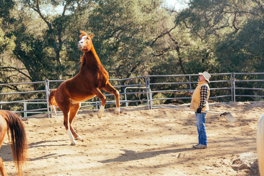 horses167.jpg
