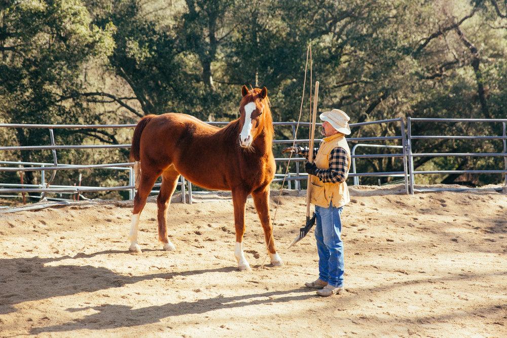 horses168.jpg