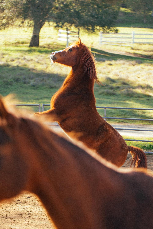 horses174.jpg