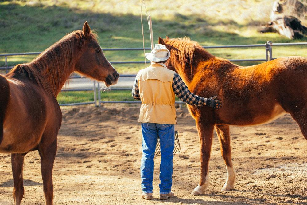 horses176.jpg
