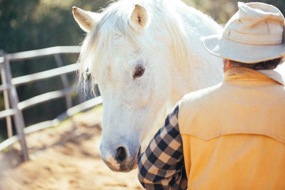 horses179.jpg