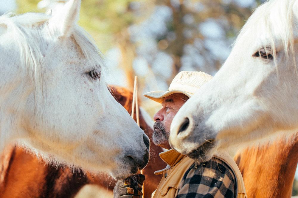 horses186.jpg
