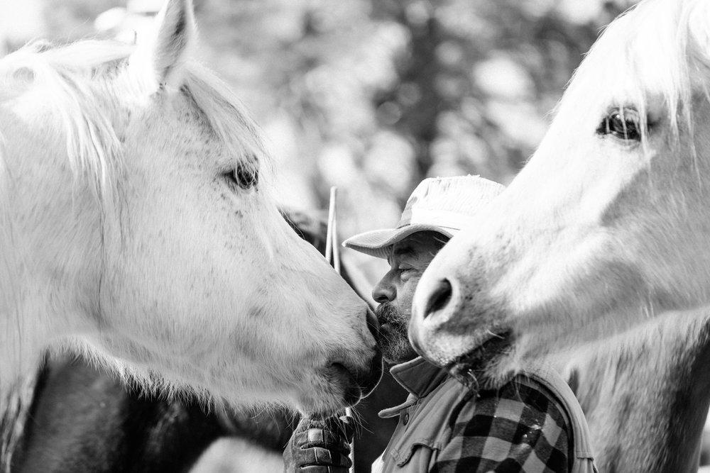 horses187.jpg
