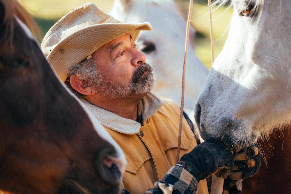 horses194.jpg