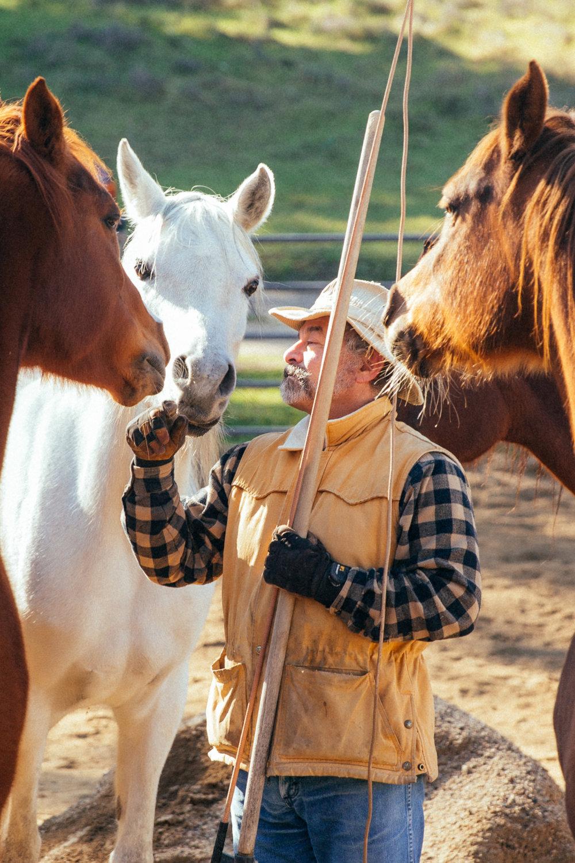 horses196.jpg