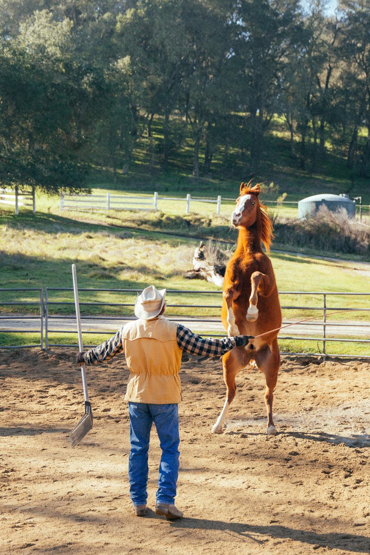 horses199.jpg