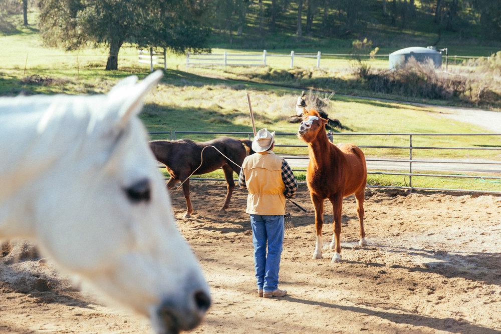 horses200.jpg
