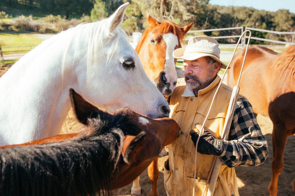 horses204.jpg