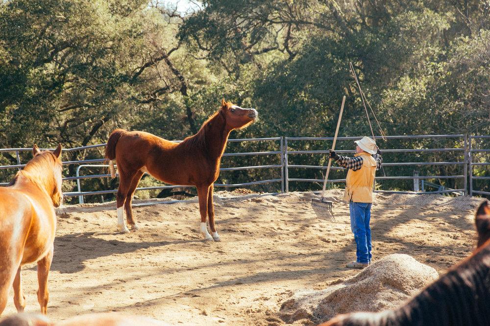 horses210.jpg
