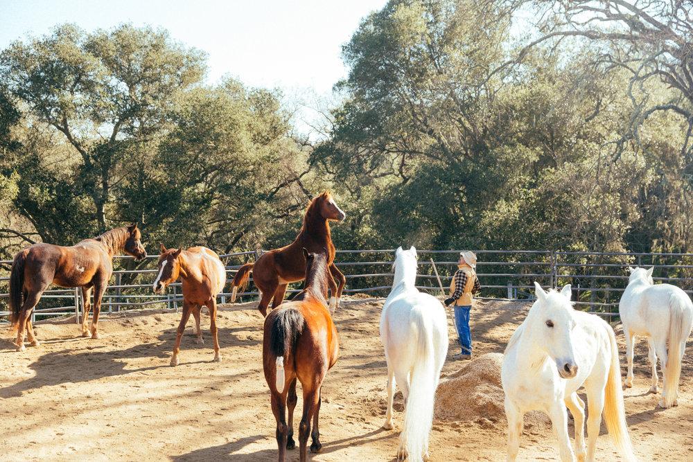 horses212.jpg