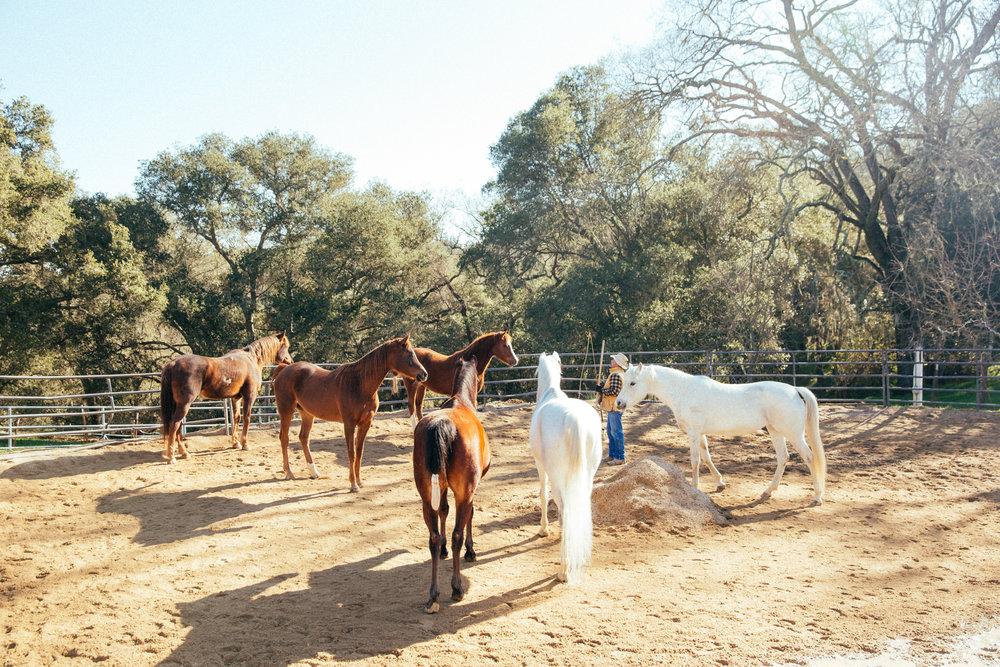 horses213.jpg