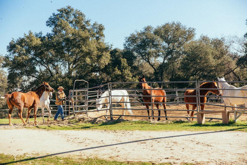 horses216.jpg