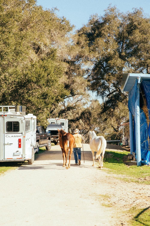 horses217.jpg