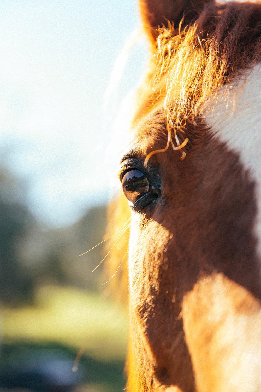 horses223.jpg