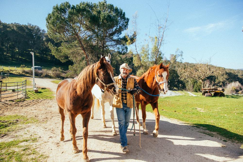 horses232.jpg