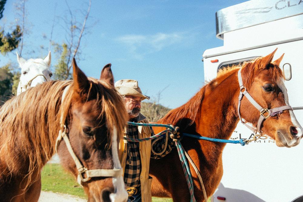 horses233.jpg