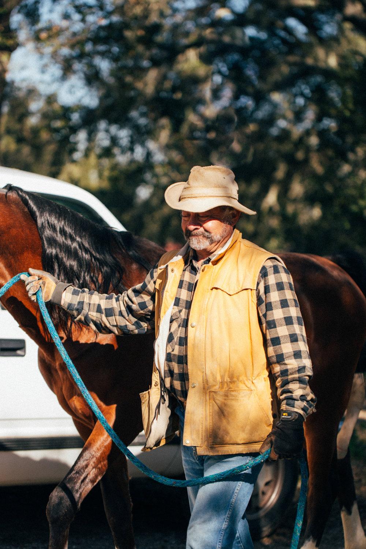horses240.jpg