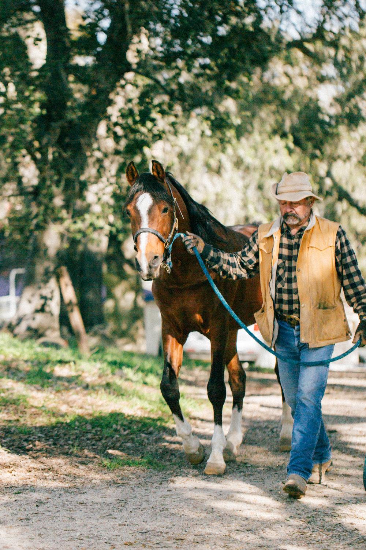 horses239.jpg