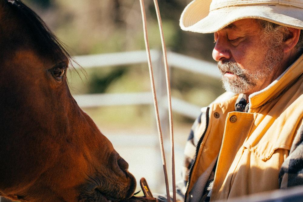 horses243.jpg