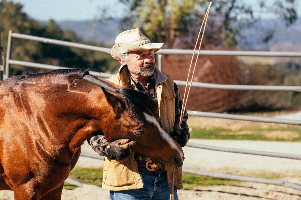 horses249.jpg