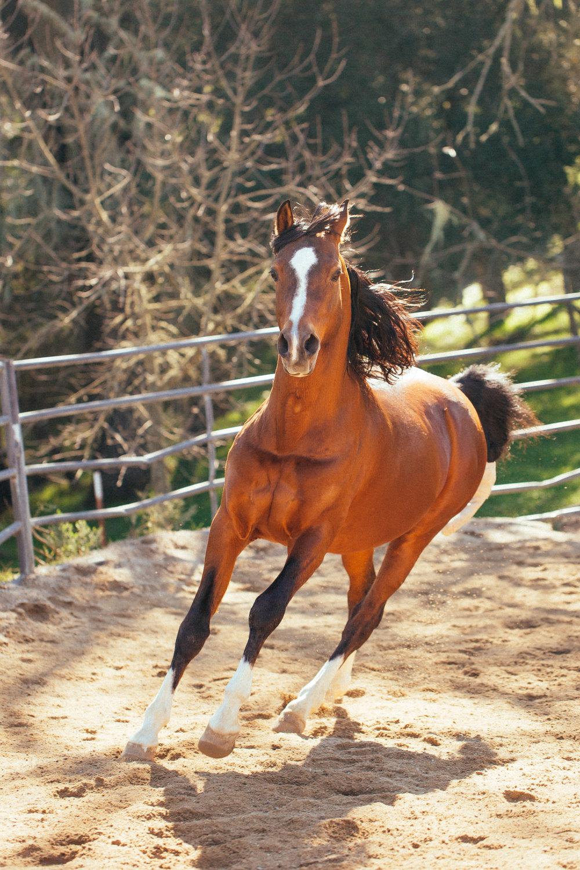 horses255.jpg