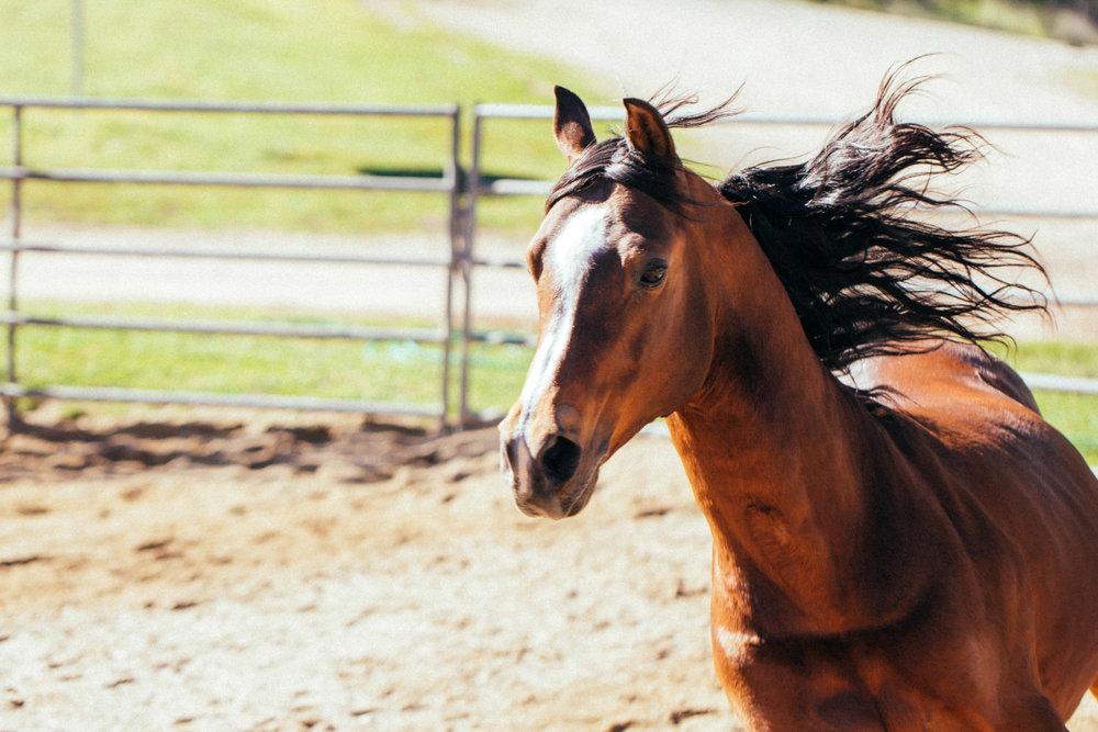 horses258.jpg