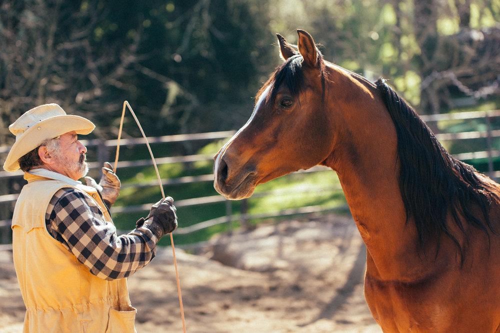horses261.jpg