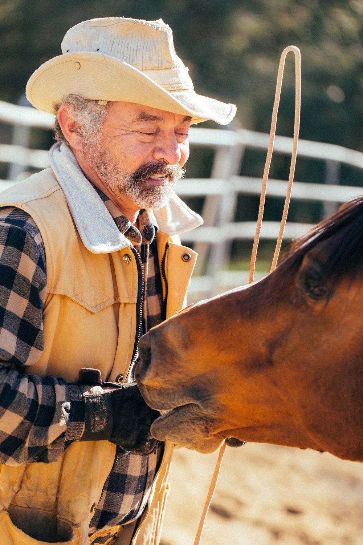 horses265.jpg