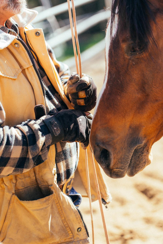 horses267.jpg