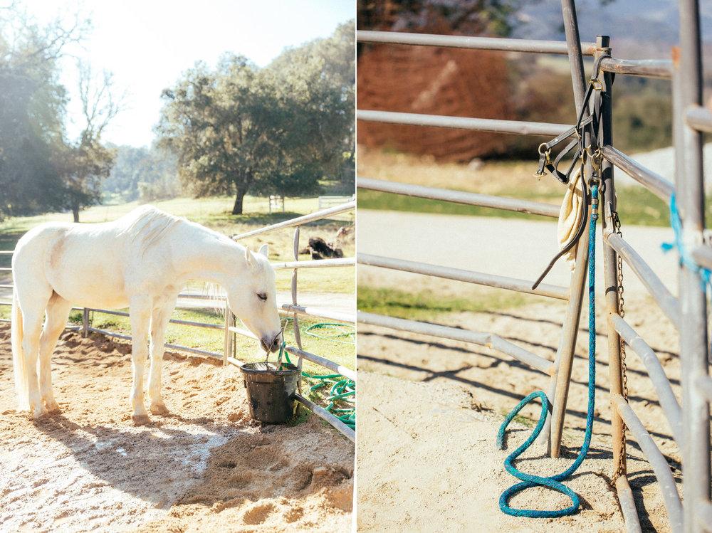horses214 copy.jpg