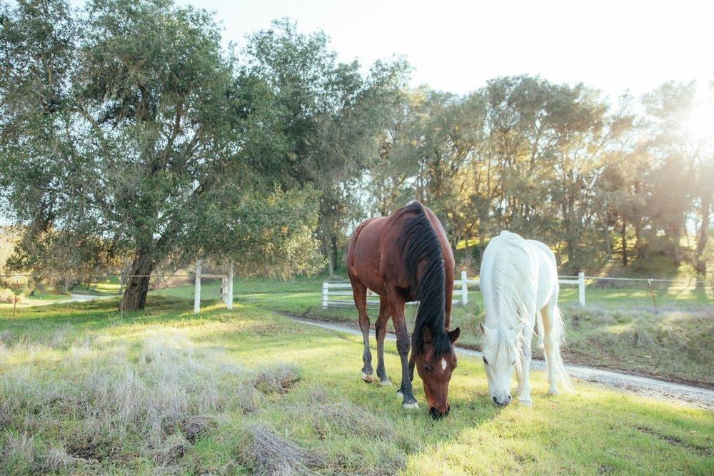 horses037.jpg