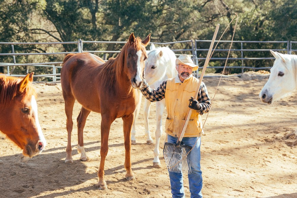 horses137.jpg