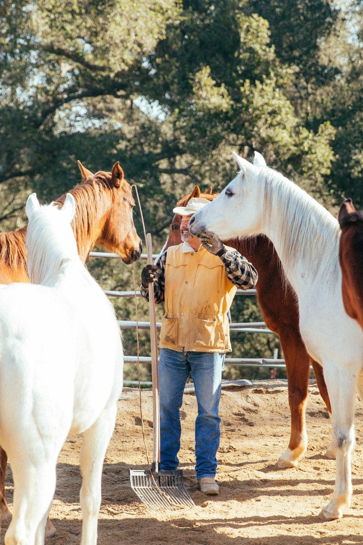 horses148.jpg