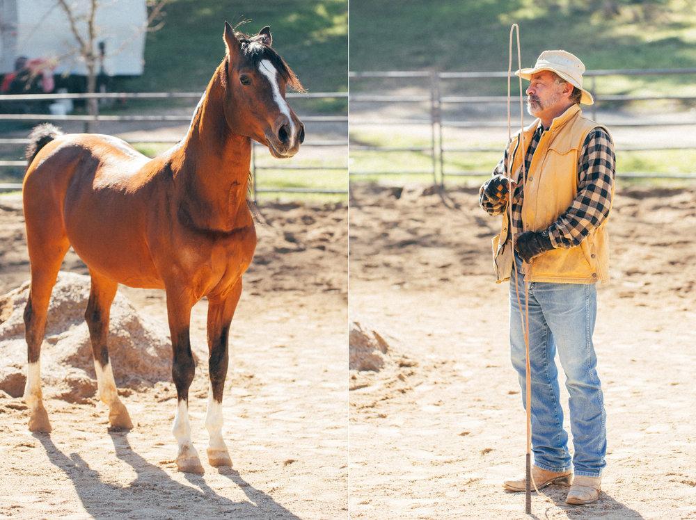 horses260 copy.jpg